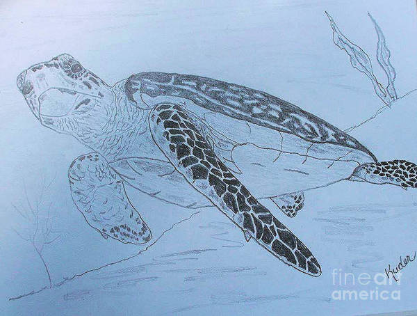 Animals Poster featuring the drawing Turtle by Sherri Gill