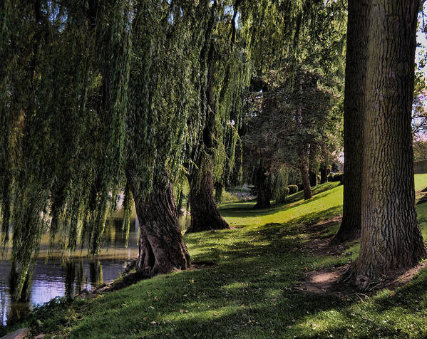 Riverside Park Poster featuring the photograph Willows And Oaks by Chris Fleming