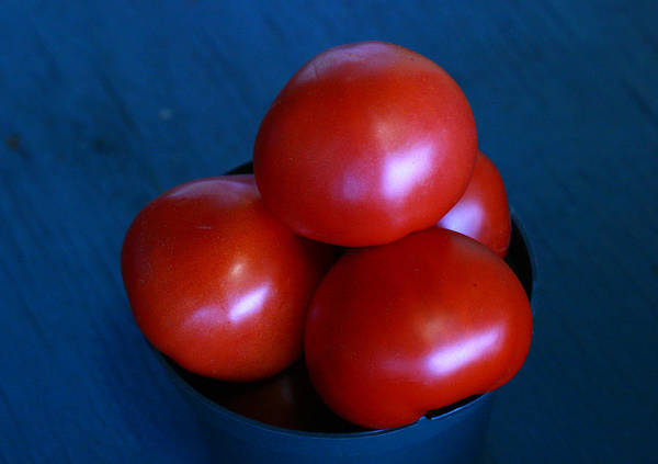 Tomato Poster featuring the photograph 209 Tomatoes by David Houston