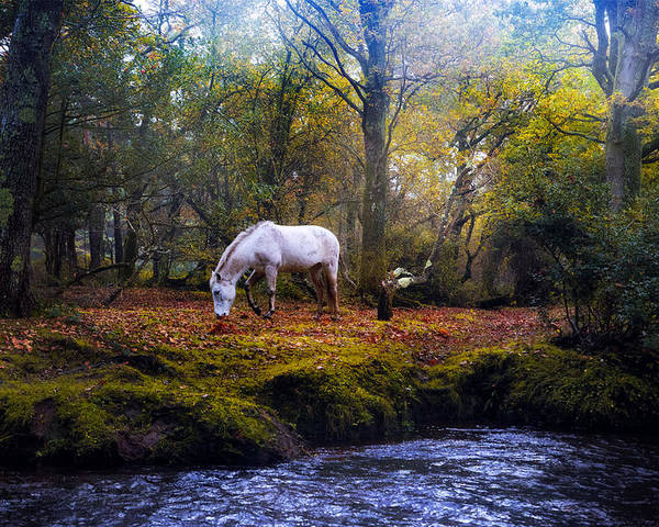 New Forest Poster featuring the photograph New Forest - England by Joana Kruse