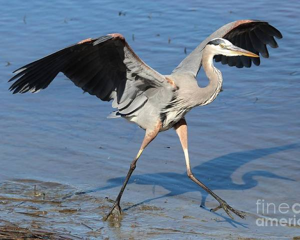Great Blue Heron Poster featuring the photograph Great Blue Heron by Paulette Thomas