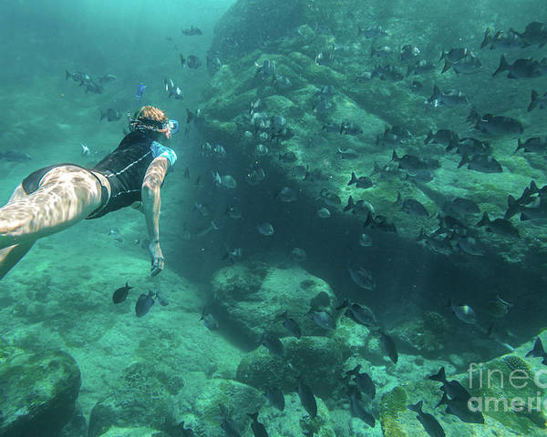 Snorkeling Poster featuring the photograph Apnea In Tropical Sea by Benny Marty