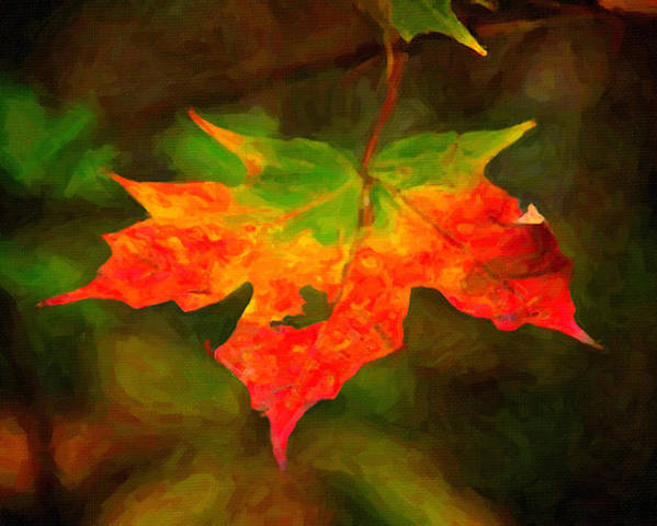 Digital Painting Poster featuring the painting Maple Leaf by Prince Andre Faubert