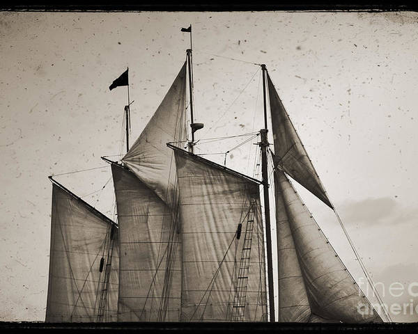Schooner Pride Poster featuring the photograph Schooner Pride Tall Ship Charleston Sc by Dustin K Ryan