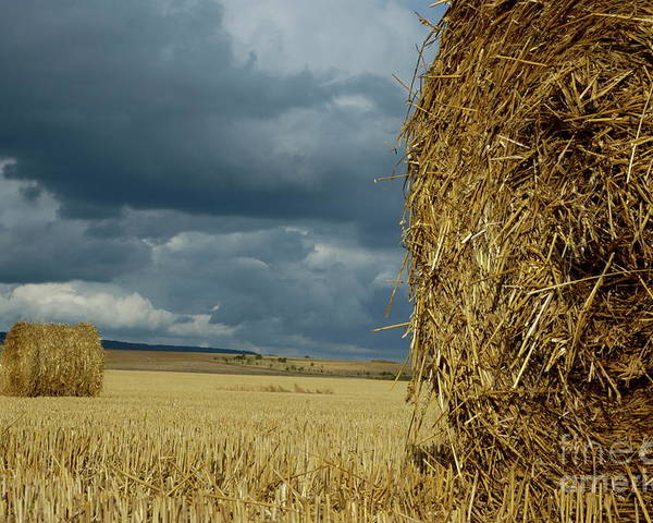 Agricultural Poster featuring the photograph Hay Bales In Harvested Corn Field by Sami Sarkis