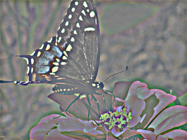 Butterfly Collection Poster featuring the photograph Butterfly Collection by Debra   Vatalaro