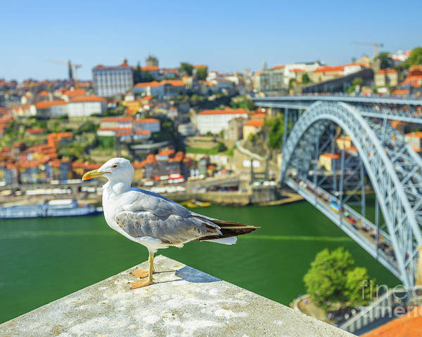 Porto Poster featuring the photograph Porto Skyline Seagull by Benny Marty