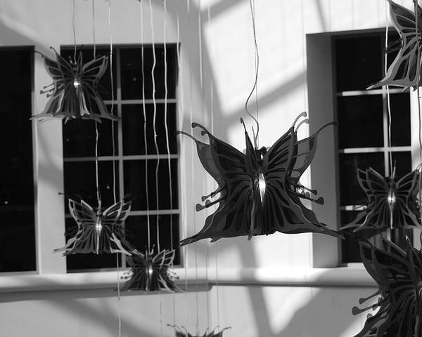 Black And White Poster featuring the photograph Hanging Butterflies by Rob Hans