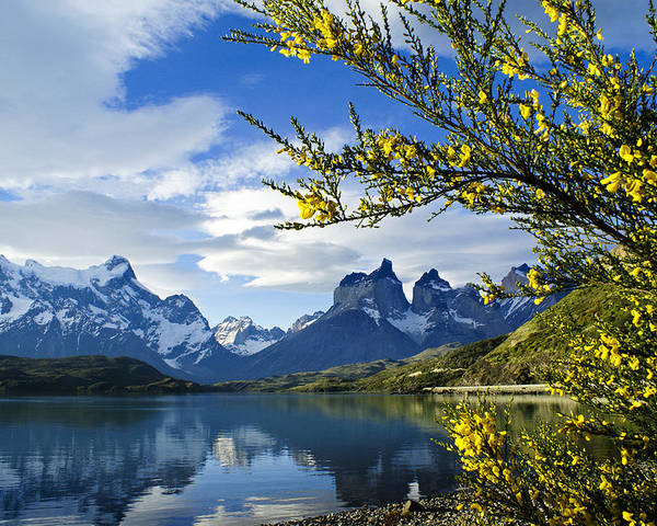 Patagonia Poster featuring the photograph Springtime in Torres del Paine by Michele Burgess