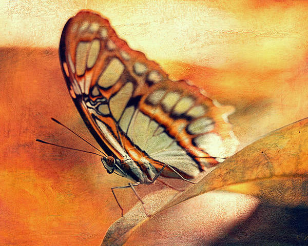 Leaf Poster featuring the photograph A Butterfly On A Leaf by Maria Angelica Maira