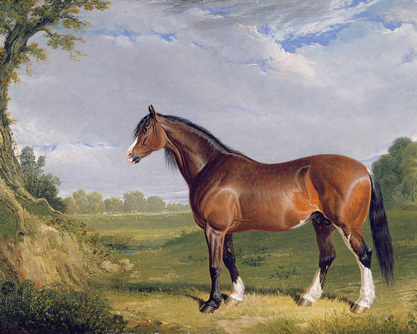 Xyc265055 Poster featuring the photograph A Clydesdale Stallion by John Frederick Herring Snr