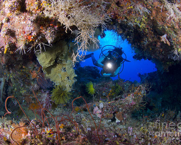 Arch Poster featuring the photograph A Diver Peers Through A Coral Encrusted by Steve Jones