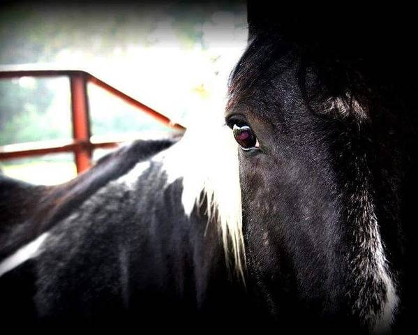 Horse Poster featuring the photograph A Horse's Spirit by Melanie Latham