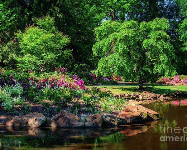 Tamyra Poster featuring the photograph A Peaceful Feeling At The Azalea Pond by Tamyra Ayles