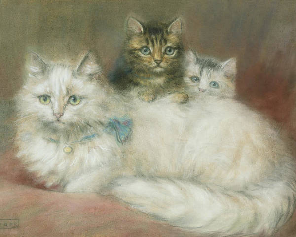 White; Long-haired; Two Poster featuring the painting A Persian Cat And Her Kittens by Maud D Heaps