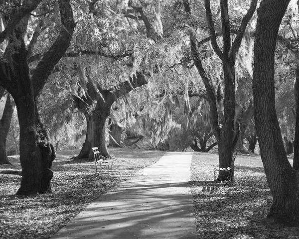 Black And White Poster featuring the photograph A Place For Contemplation - Black And White by Suzanne Gaff