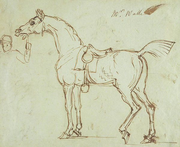 Horse Poster featuring the drawing A Racehorse, Bridled And Saddled by James Seymour