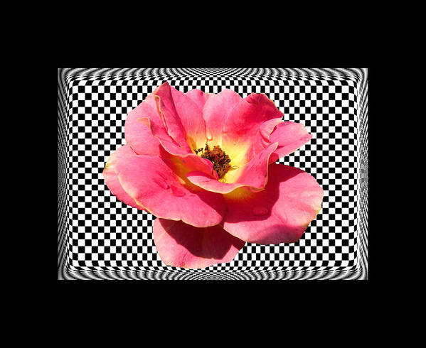 Rose Poster featuring the photograph A Rose With A Checkered Background by Rosalie Scanlon