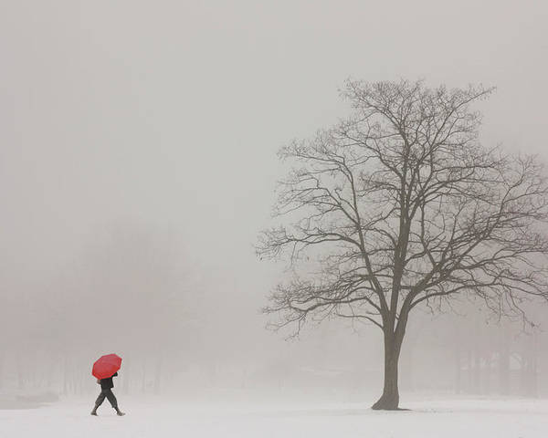 Snowy Winter Poster featuring the photograph A Shortcut Through The Snow by Tom York Images