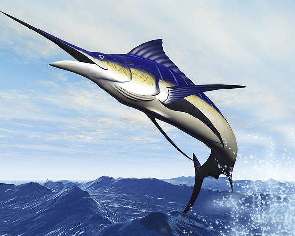 Underwater Poster featuring the photograph A Sleek Blue Marlin Bursts by Corey Ford