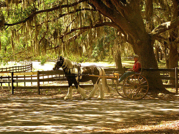 Horse Poster featuring the photograph A Stroll In The Park by Adele Moscaritolo