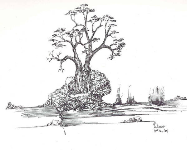Tree Poster featuring the drawing A Tree A Rock And Some Grass by Padamvir Singh