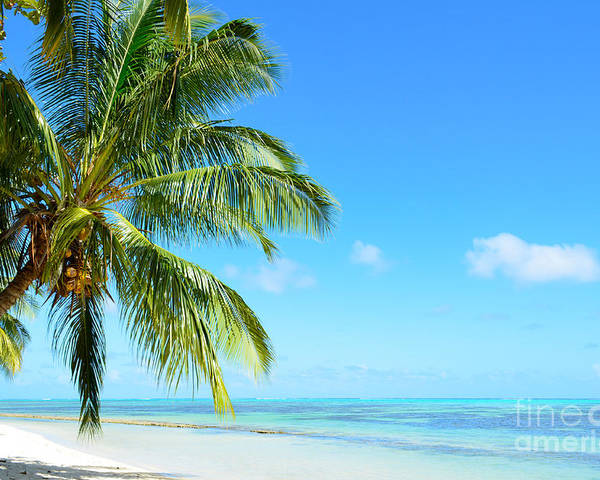 Beach Poster featuring the photograph A Tropical Palm Tree Beach by IPics Photography