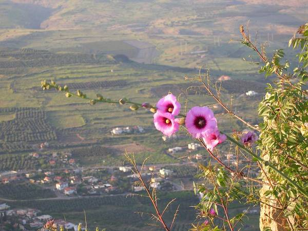 Mt Arbel Poster featuring the photograph A View From Mt. Arbel by Susan Heller