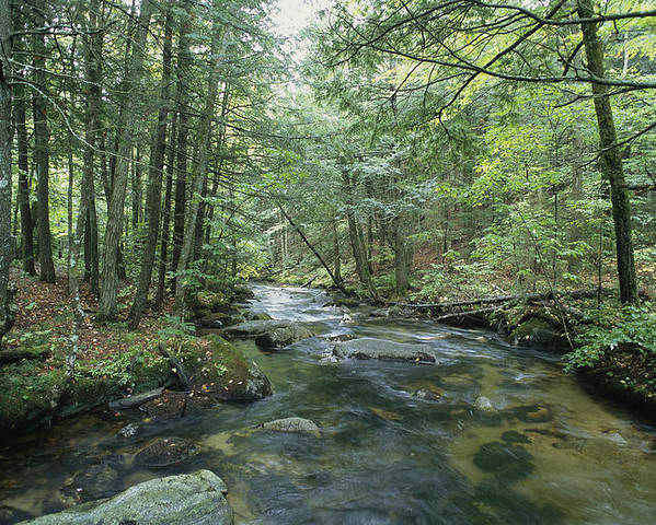 United States Of America Poster featuring the photograph A Woodland View With A Rushing Brook by Heather Perry