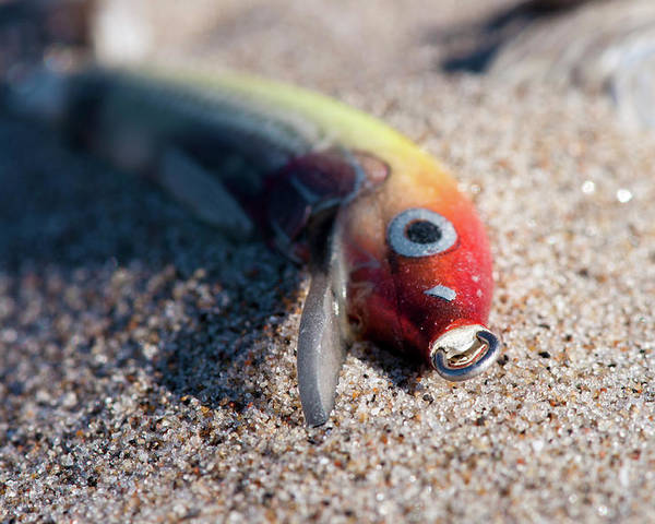 Sand Poster featuring the photograph Abandoned Lure by Gary Chapple