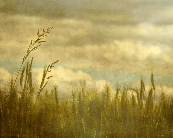 Wheat Poster featuring the photograph Above It All by Rebecca Cozart