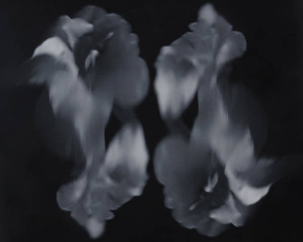 Black And White Poster featuring the photograph Abstract Flowers by Scott Wyatt
