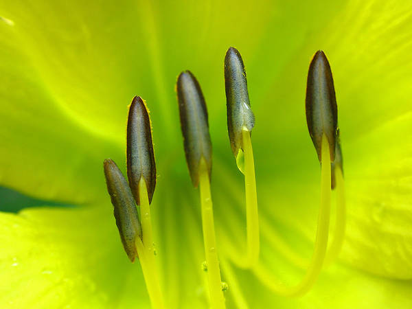 Spring Poster featuring the photograph Abstract Lily Flower by Juergen Roth