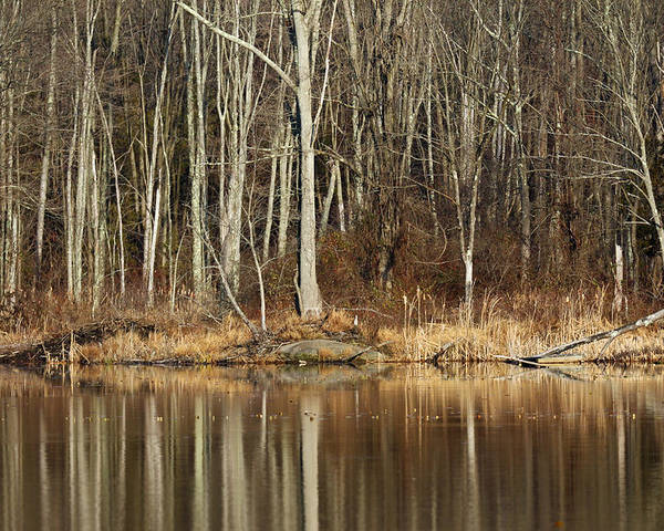 Pond Poster featuring the photograph Across Skymount Pond - Autumn Browns by Mother Nature
