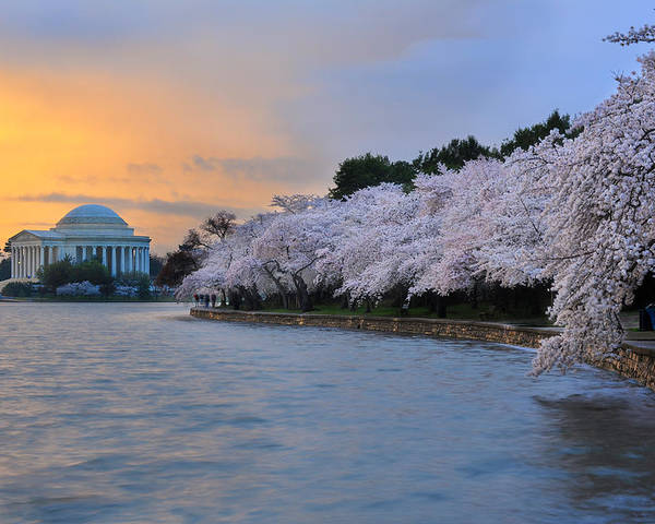 National Cherry Blossom Festival Poster featuring the photograph After The Rain by Bernard Chen