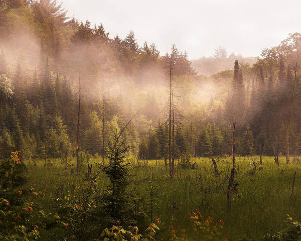 Algonquin Park Poster featuring the photograph Afternoon Mist by Linda McRae