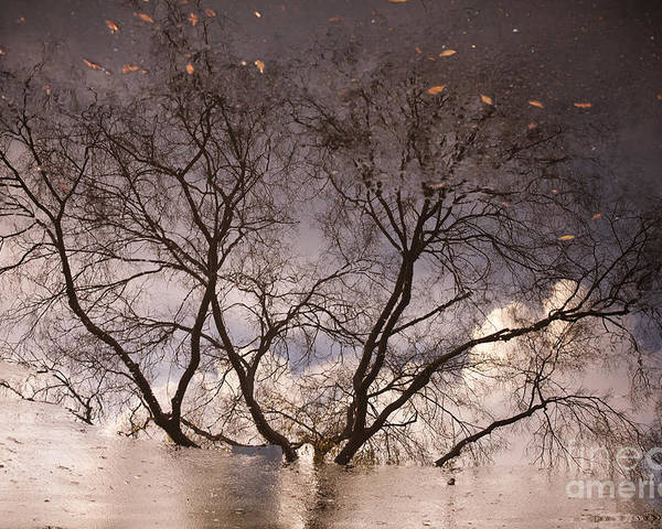 Sonoma County Poster featuring the photograph Afternoon Reflection by Derek Selander