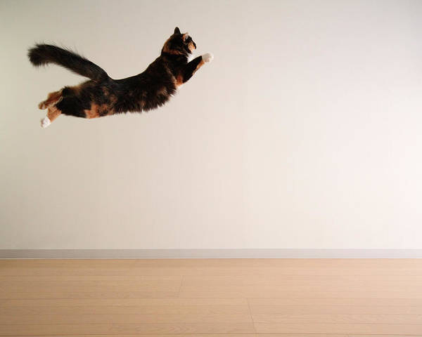 Horizontal Poster featuring the photograph Airborne Cat by Junku