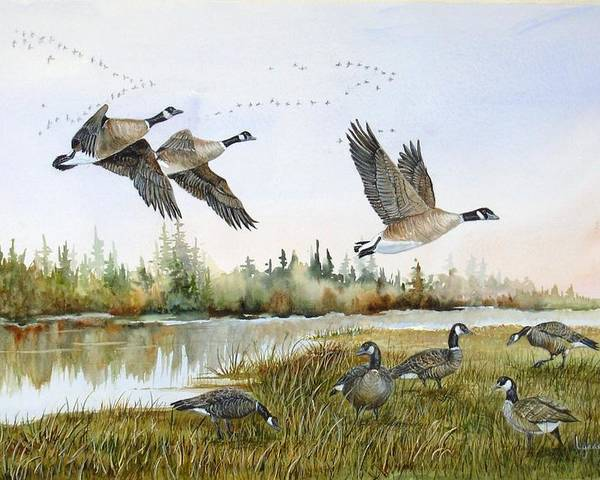 Aleutian Geese Poster featuring the painting Aleutian Geese At Lake Earl by Lynne Parker