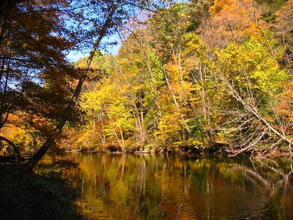 Water Poster featuring the photograph Alexandria Creek In The Fall by Sara Raber