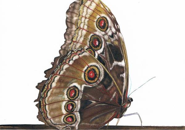 Butterfly Poster featuring the painting All Dressed Up by Mattie O