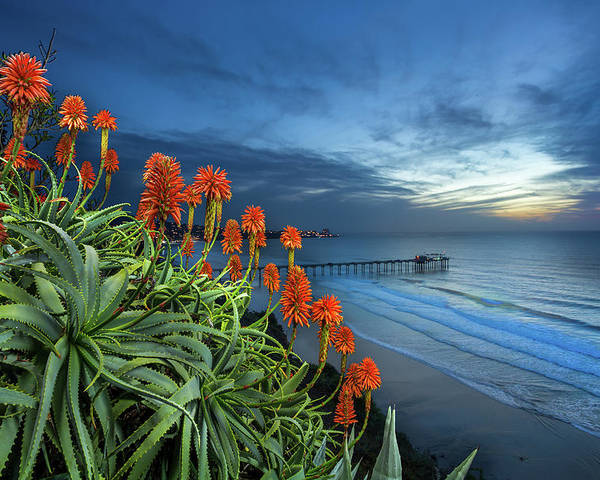 Green Poster featuring the photograph Aloe Vera Bloom by Creigh Photography
