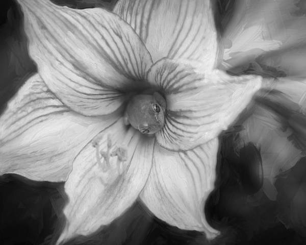 Flower Poster featuring the photograph Amaryllis And Tree Frog Painted Bw by Rich Franco