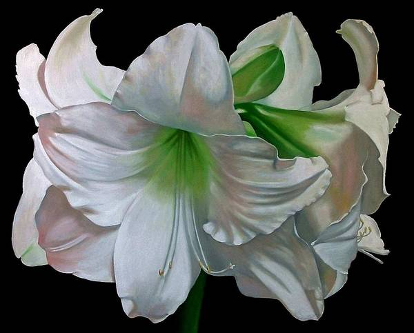 Doug Strickland Poster featuring the painting Amaryllis by Doug Strickland