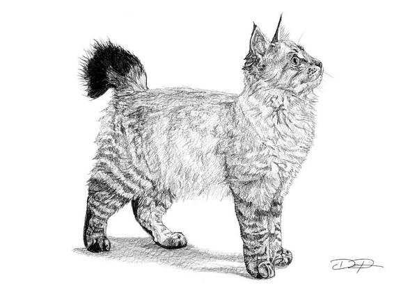 White American Bobtail Cat