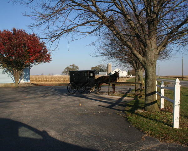 Horse Poster featuring the photograph Amish 4 by Eric Irion