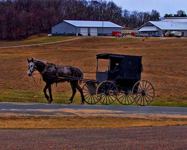 Wisconsin Poster featuring the photograph Amish Buggy by Tommy Anderson
