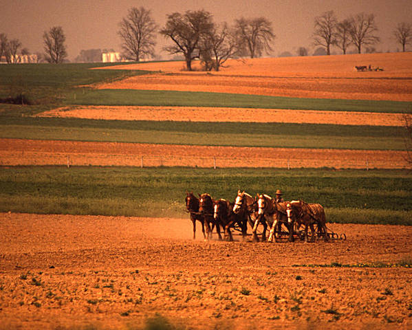 Lancaster Poster featuring the photograph Amish Country Farm Landscape by Blair Seitz