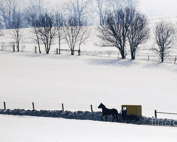 Amish Poster featuring the photograph Amish Horse And Buggy In Snowy Landscape by Jeremy Woodhouse