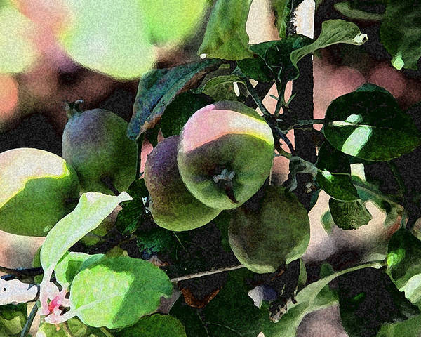 Apples Poster featuring the photograph An Apple A Day by Carol Eliassen
